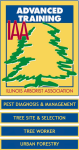 Advanced Training for Certified Arborists in Illinois