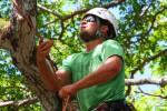 Find An Arborist