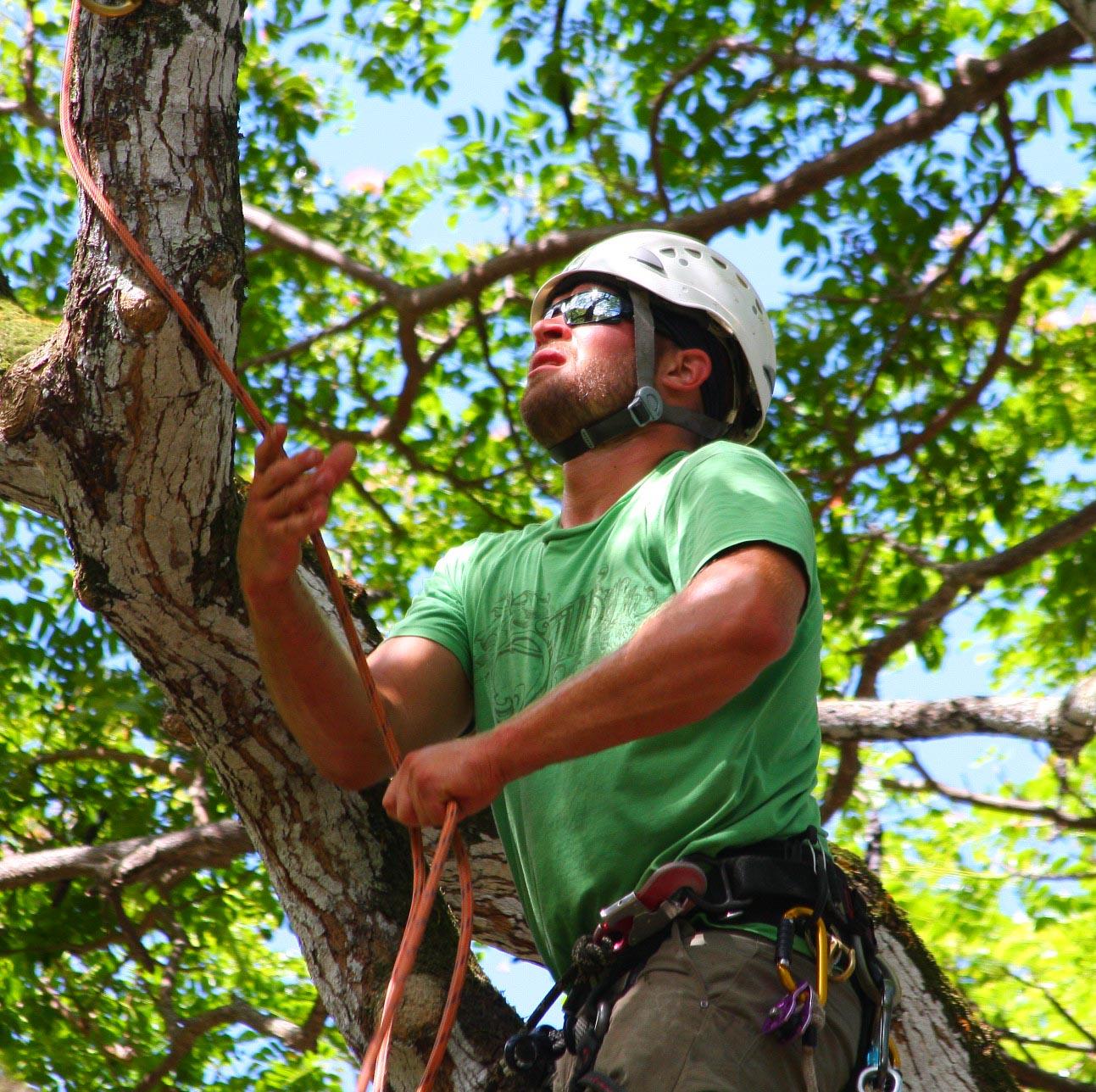 Find An Arborist In Illinois with the Illinois Arborist AssociationArborist