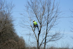 Extensive Resources for Municipal Arborists in Illinois